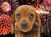"""Pet Prozac """"Sileo"""" Approved For Frightened Pets Post July 4th Pop-Off (And Other Thunderous Days)"""
