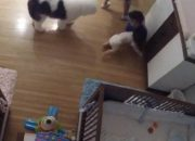 Came and Table: Quick Thinking Impulses of Nine Year-Old Brother Saves Baby Bro Falling From Changing Table To Floor