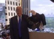 Even America's Symbol: The Bald Eagle Found Running For Shelter Since TRUMP Presidency Made Official